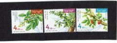 Aromatic Plants - mint