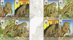 Endangered Species (Leopards) - SINGLE